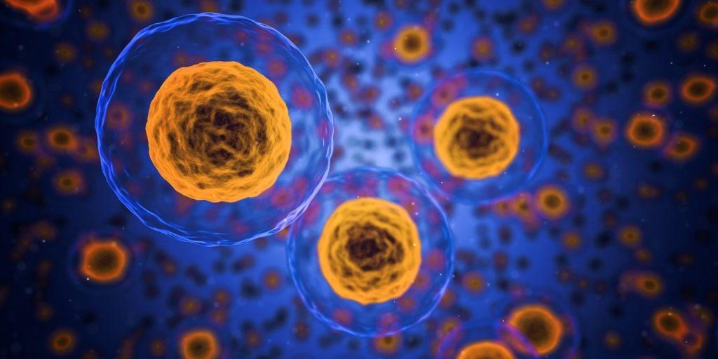 cells, human, medical